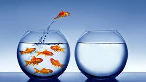 Coraggio e rischio, prudenza e audacia, serendipità e visione: gli ingredienti per il futuro